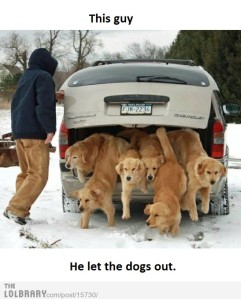 who-let-the-dogs-out-