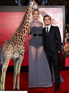 lawrence giraffe
